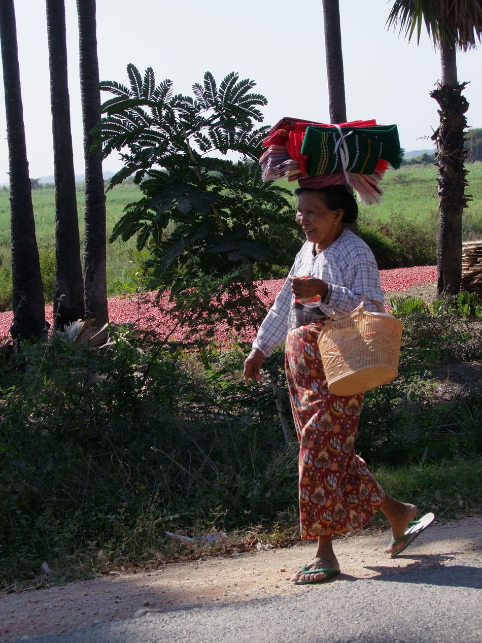 Myanmar Woman in Traditional Clothing Walking past Red Chillies Drying Basket Blue Sky Bush Composition Drying Chillies Full Frame Full Length Myanmar No Incidental People On The Move On The Way Home One Person Outdoor Photography Palm Tree Real People Red Chillies Standing Sunlight And Shadow Traditional Clothing Walking Women
