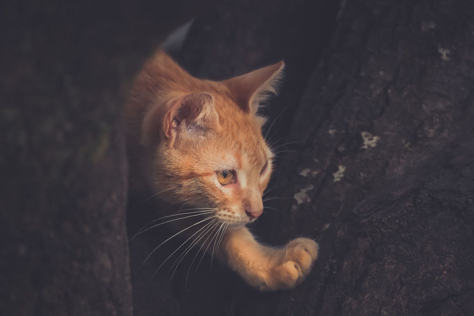 Animal Themes Close-up Day Domestic Animals Domestic Cat Feline Ginger Cat Mammal No People One Animal Outdoors Pets