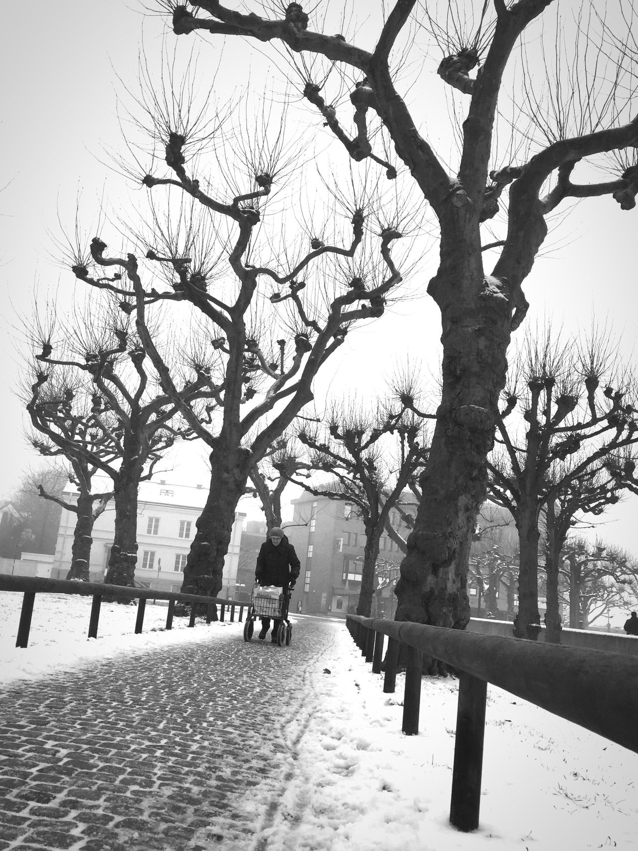 Bare Tree Outdoors Tree EyeEm Best Shots - Black + White Black And White Bw_collection