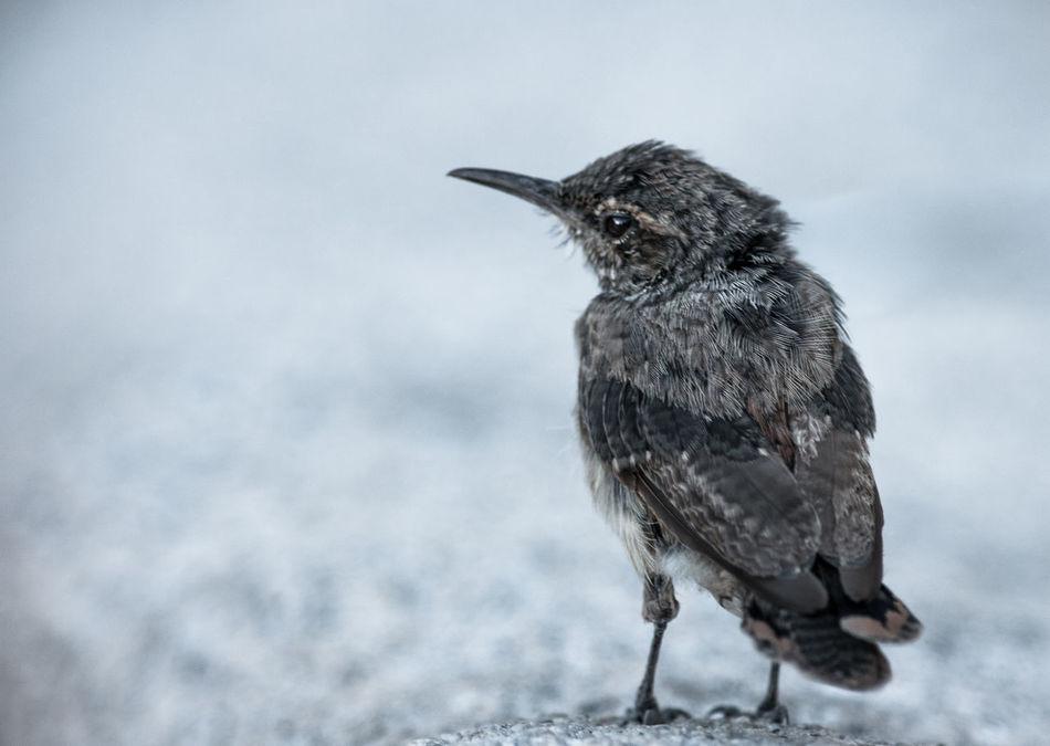 Poor little bird Yvon Bourque Check This Out Birds Lone Bird Natu Taking Photos Animals