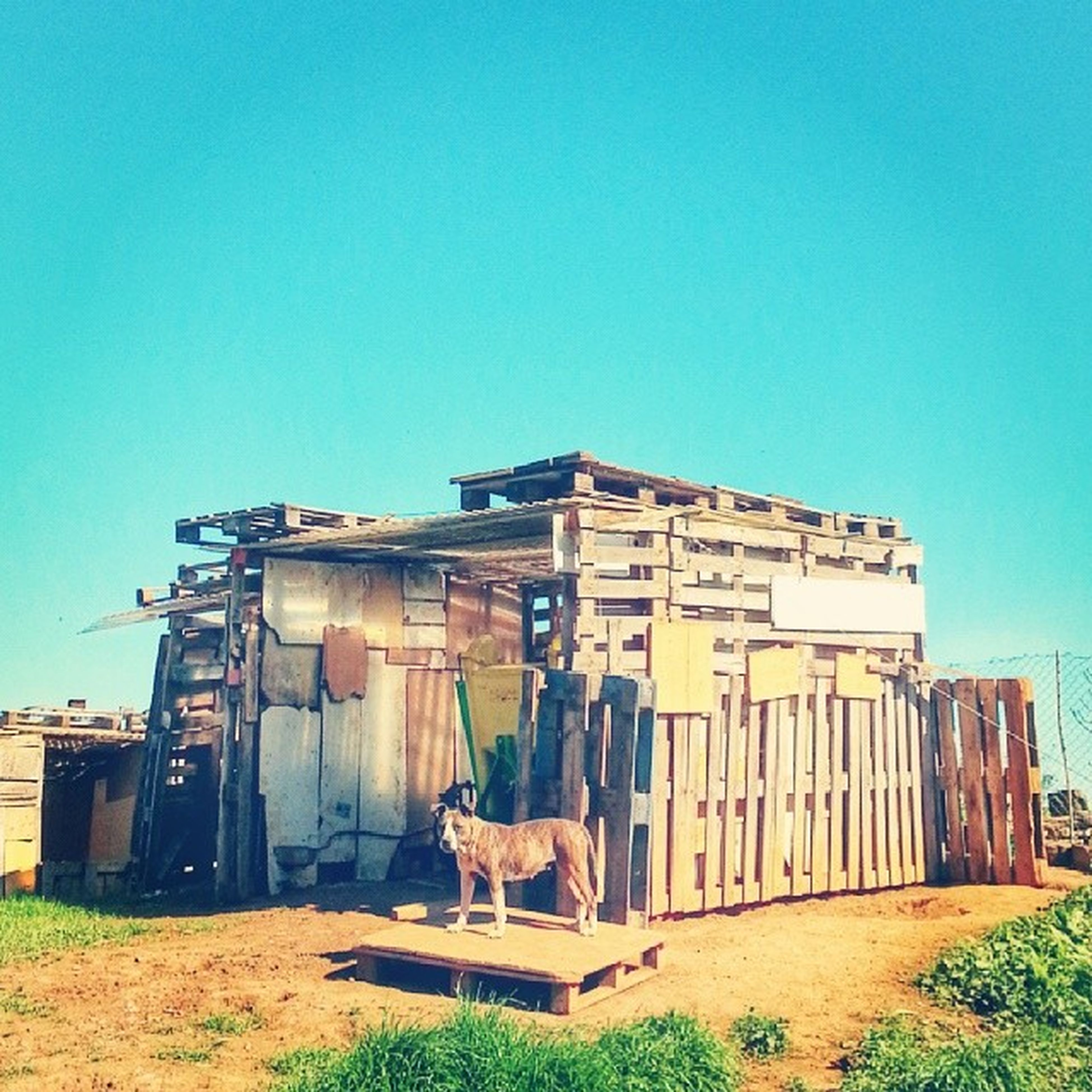 architecture, built structure, building exterior, clear sky, blue, grass, abandoned, copy space, house, old, residential structure, field, obsolete, run-down, barn, outdoors, sunlight, damaged, day, no people