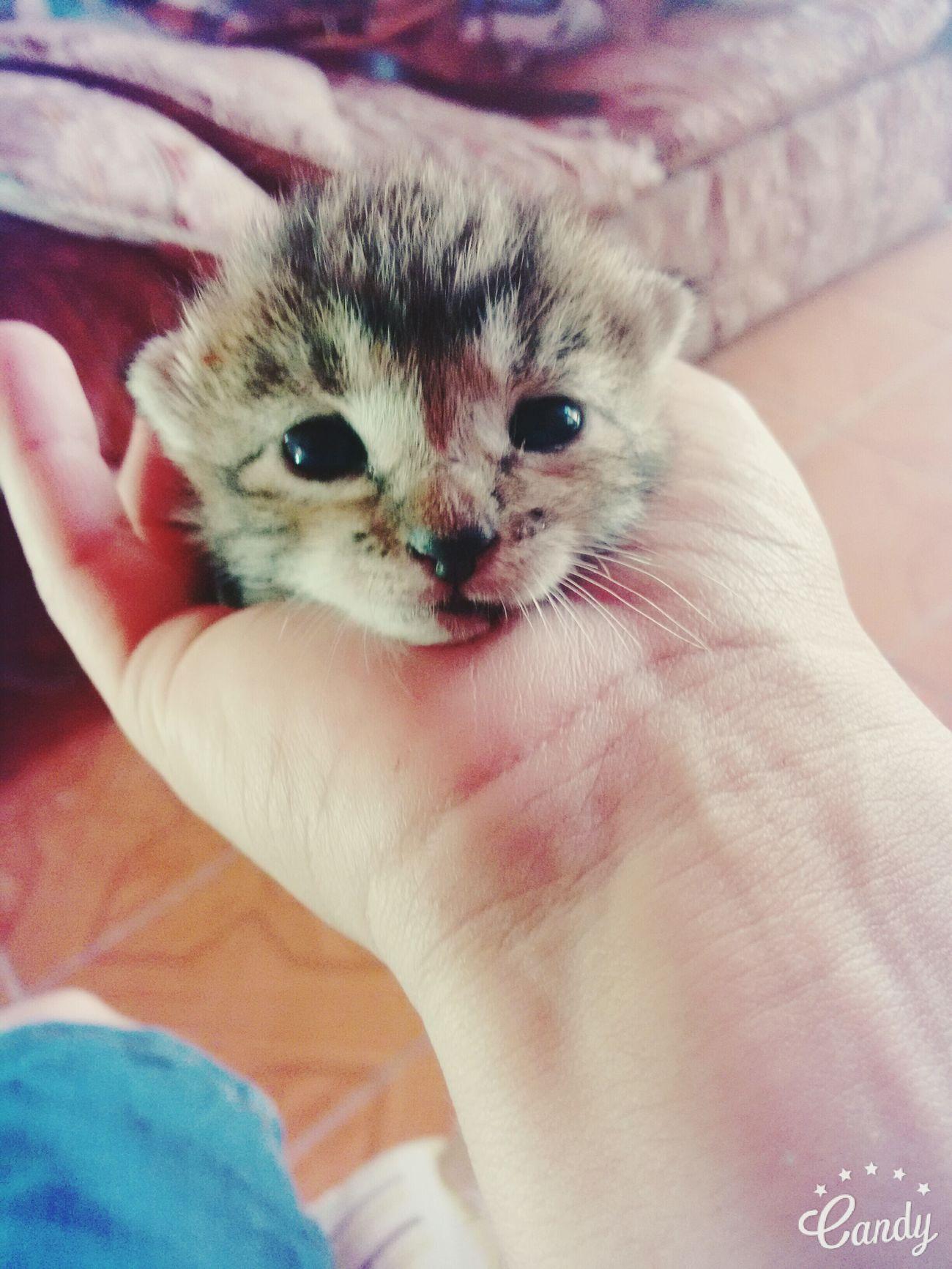 Mi pequeño gatito :3 Cats 🐱 Catlover ♡ ForeverCatLover Catloverchile
