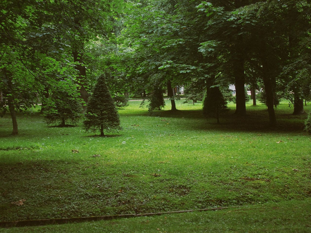 tree, nature, grass, growth, tranquility, forest, beauty in nature, landscape, outdoors, no people, scenics, day