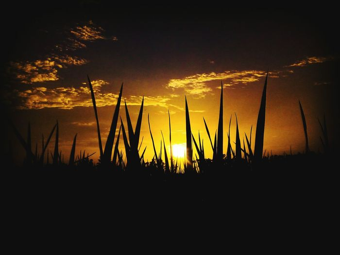 sunset in between grass EyeEmNewHere Silhouette Sunset No People Nature Outdoors Water Night Beauty In Nature Sky Close-up