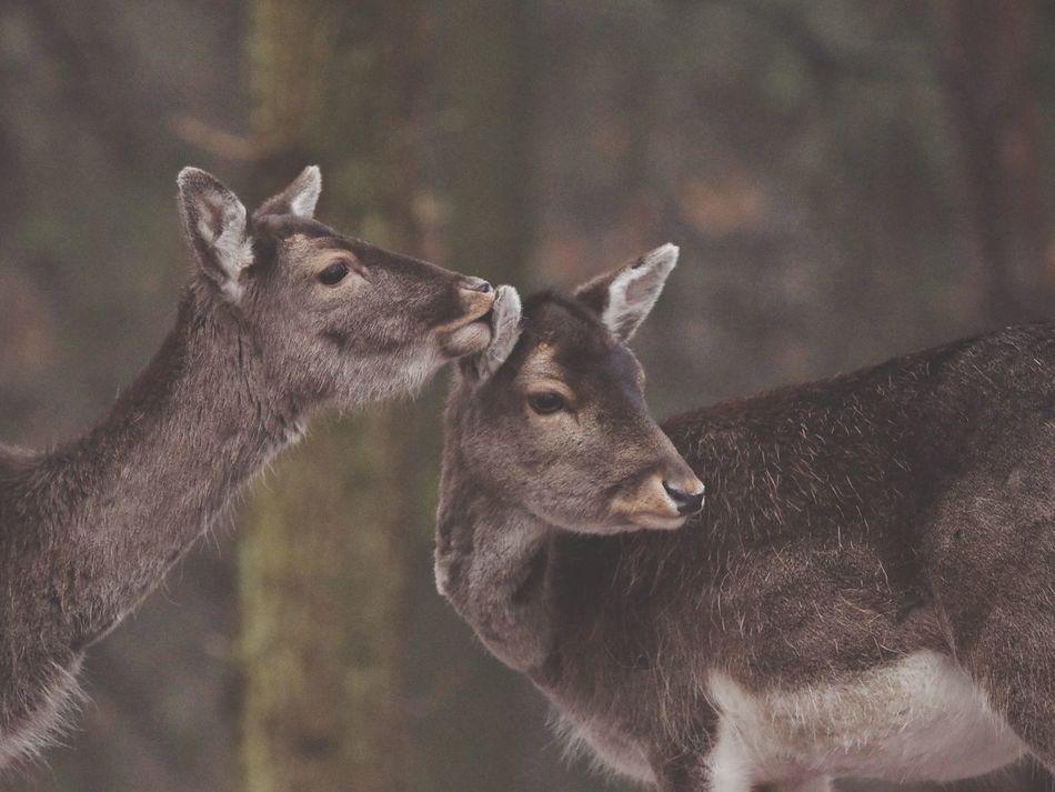 Beautiful stock photos of hirsch, Animal Themes, Animal Wildlife, Animals In The Wild, Close-Up