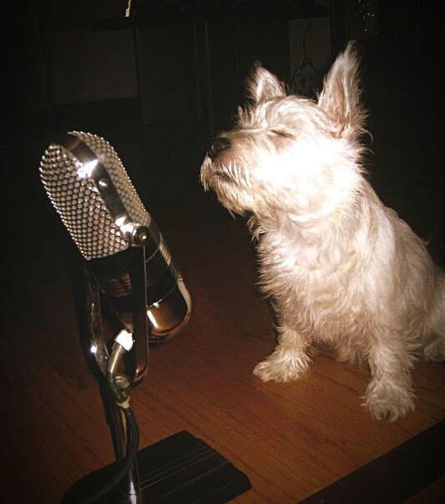 Minnie sings the blues
