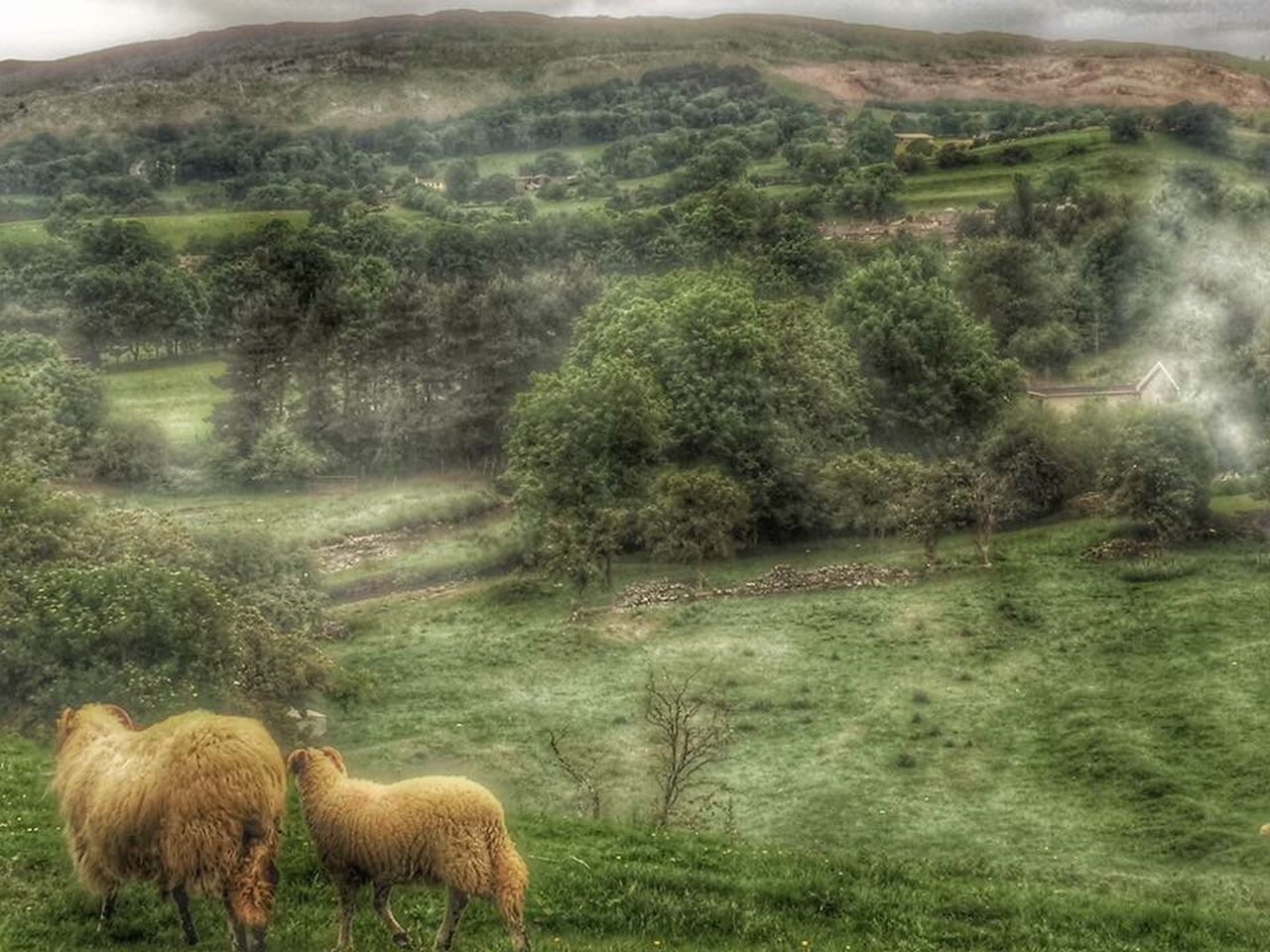 Sheep Nature Animals Close Up Nature On Your Doorstep Animals Nature Animals Landscapes Castle Grounds