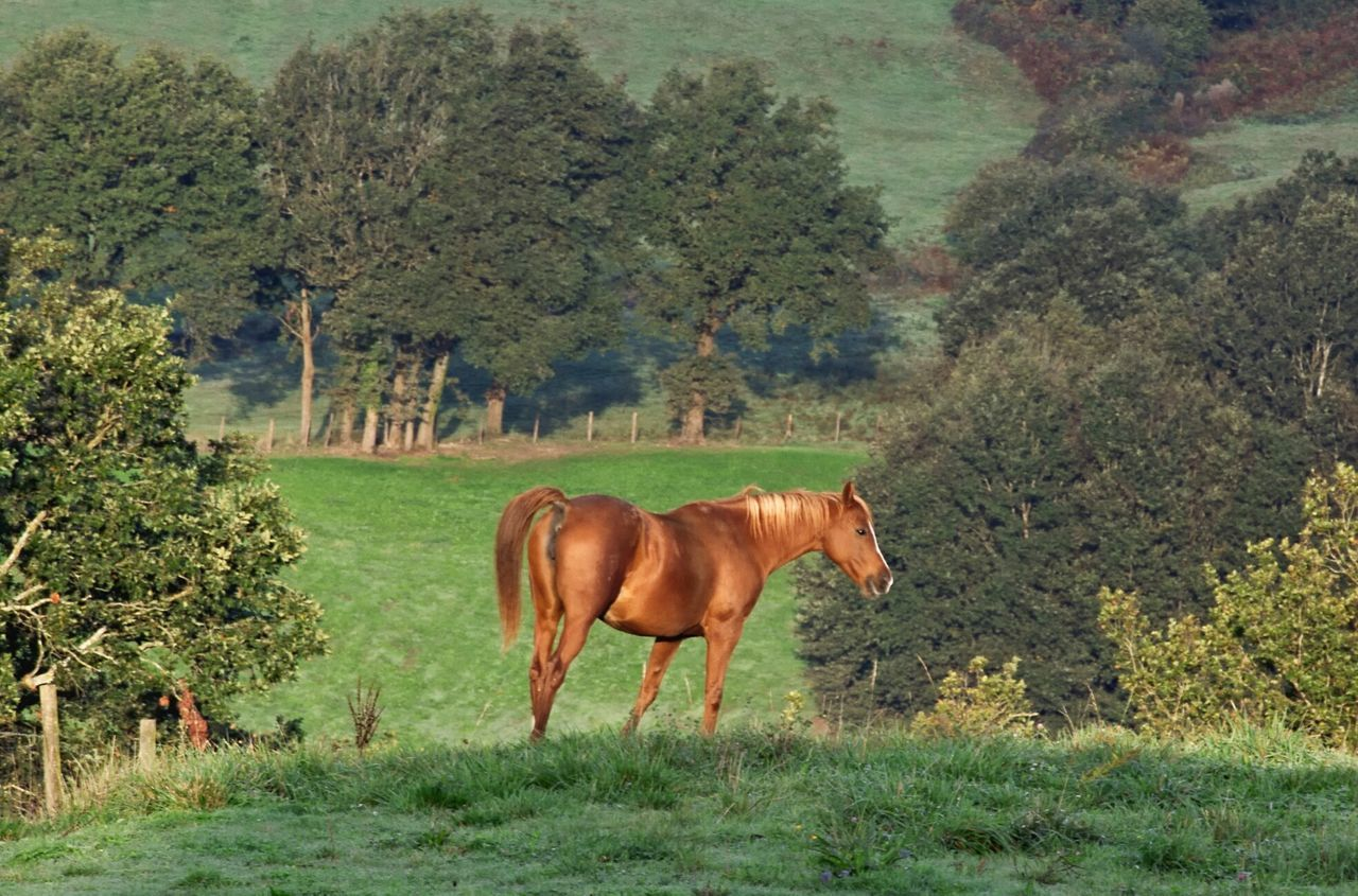 Kissed by the morning sun repost for Exploring Style Horse One Animal Grass No People Landscape Nature Outdoors Beauty In Nature Day Atmospheric Mood Brown Horse Trees And Bushes Always Be Cozy My Year My View