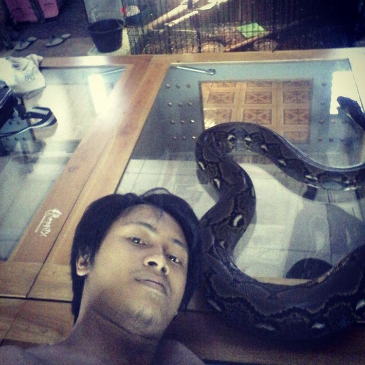 I am with giant Reticulatedpython Reticnation Reticreport Reptile