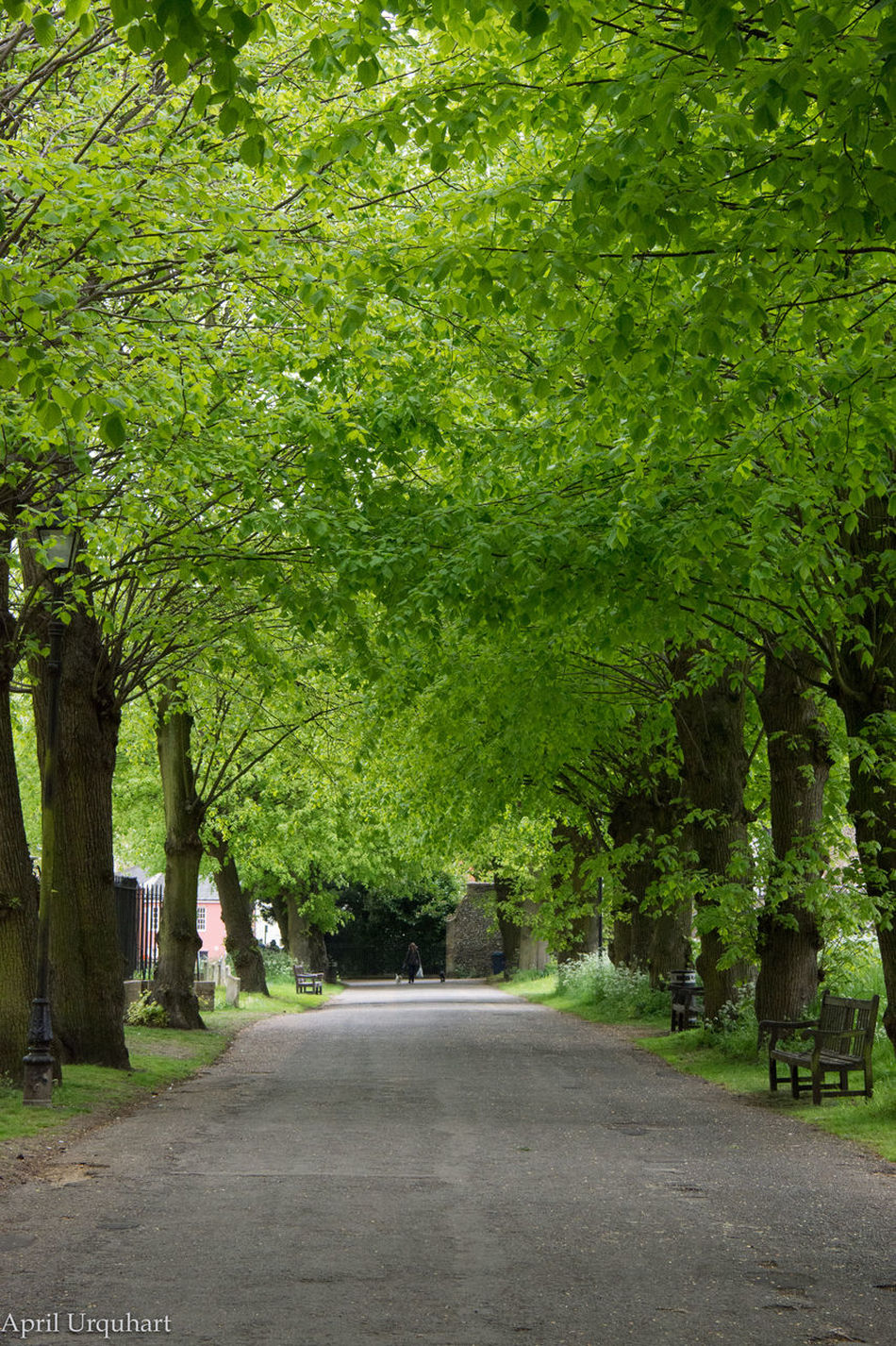 Peaceful tree lined path Nature Outdoors Peaceful Peaceful View Road The Way Forward Tree Tree Lined Path Tree Lined Road Trees