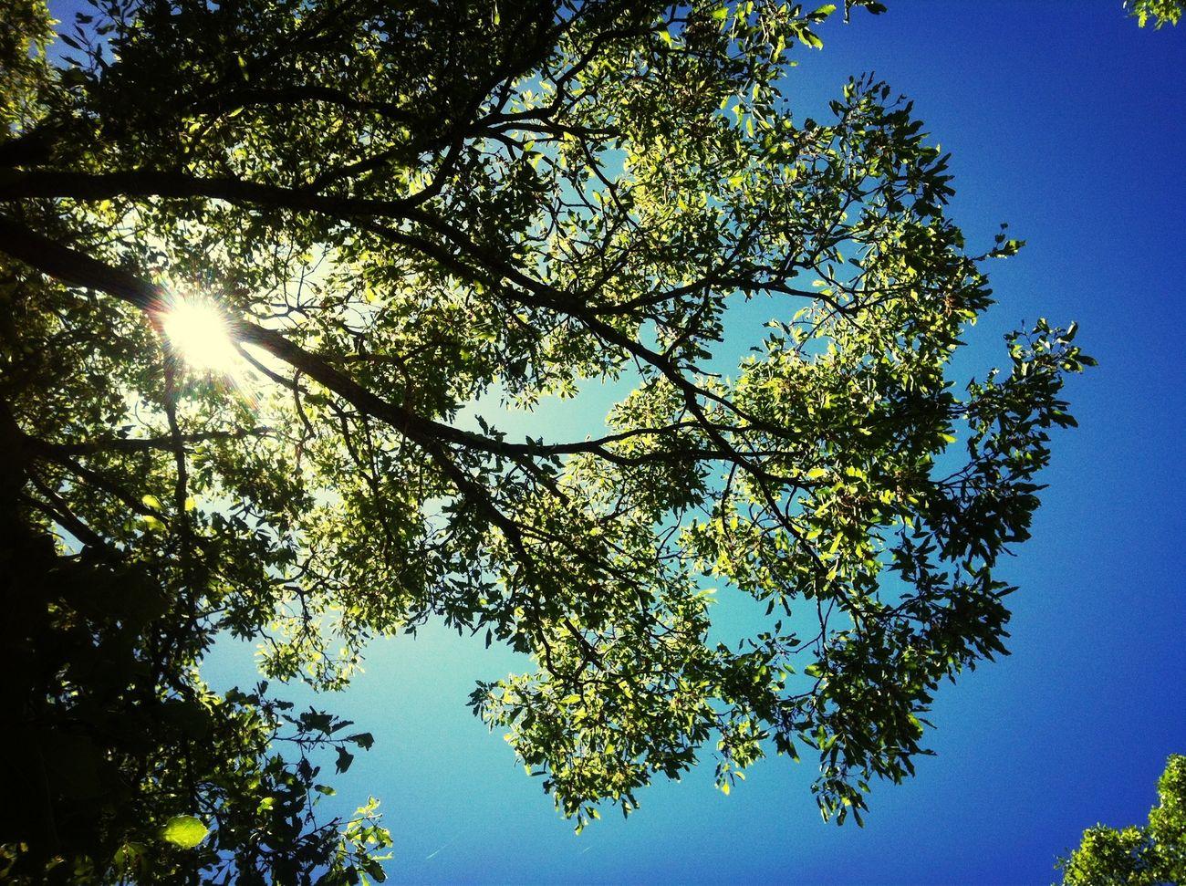 Tree Sun Beauty Lebanon