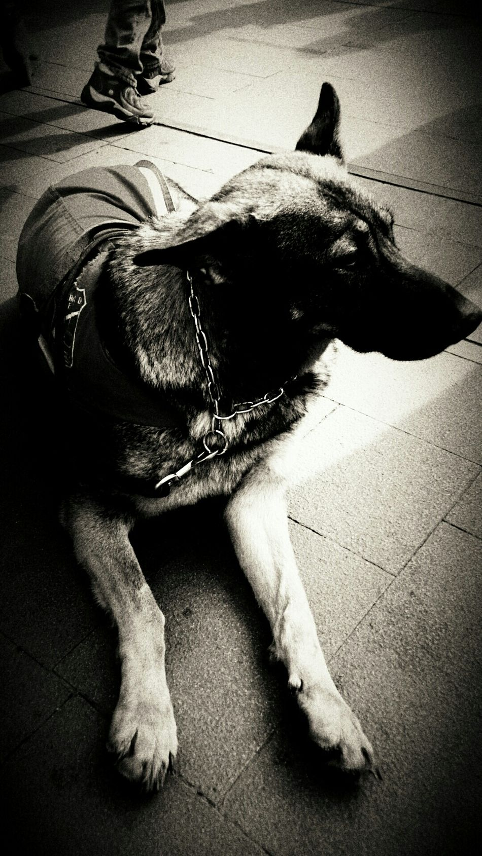 Galaxy Camera EyeEm The Best Shots Streetphotography Black & White My Unique Style Moment Lens FromChile The Police Dog