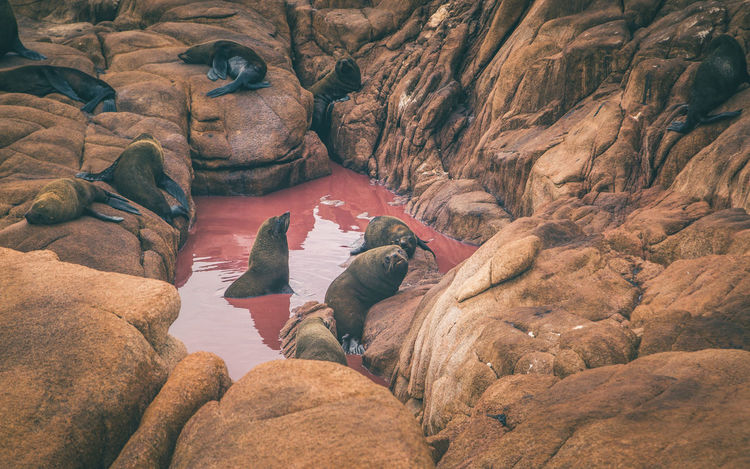 Sea Lions by the coast of Cabo Polonio, Uruguay. Animals In The Wild Cabo Polonio Red Rocky Beach Sea Lion Animal Animal Themes Animal Wildlife Beauty In Nature Blood Cave Coast Day Mammal Nature No People Outdoors Pool Rock - Object Rock Formation Scenics Sea Water Wild Wildlife