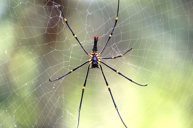 Spider Spiderweb Spider In The Web Yellow And Black Spider Insect Insect Photography Spiderwebs Spider's Web Insects Of The World Insect Photo Spider Photography Spiderworld Natural Beauty