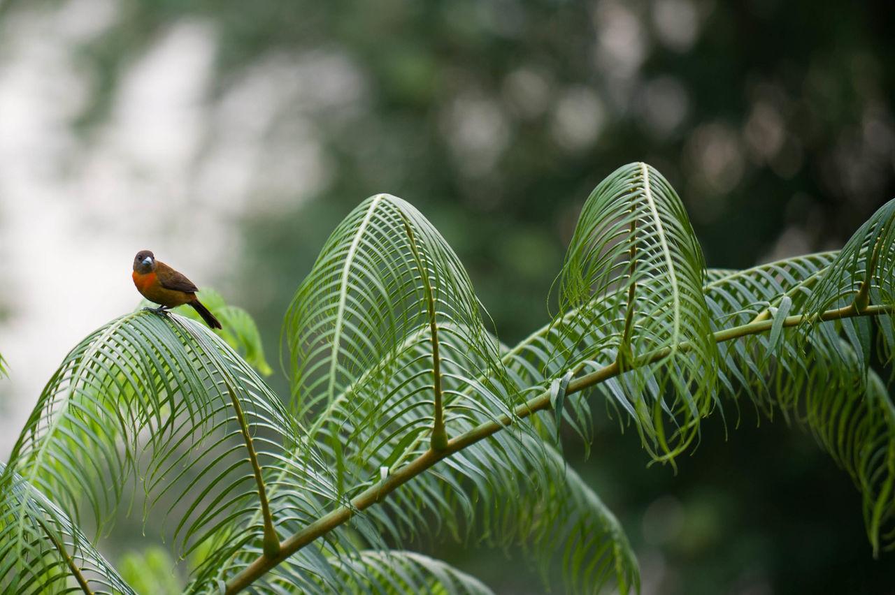 Beautiful stock photos of jungle, , Animal, Bird, Branch