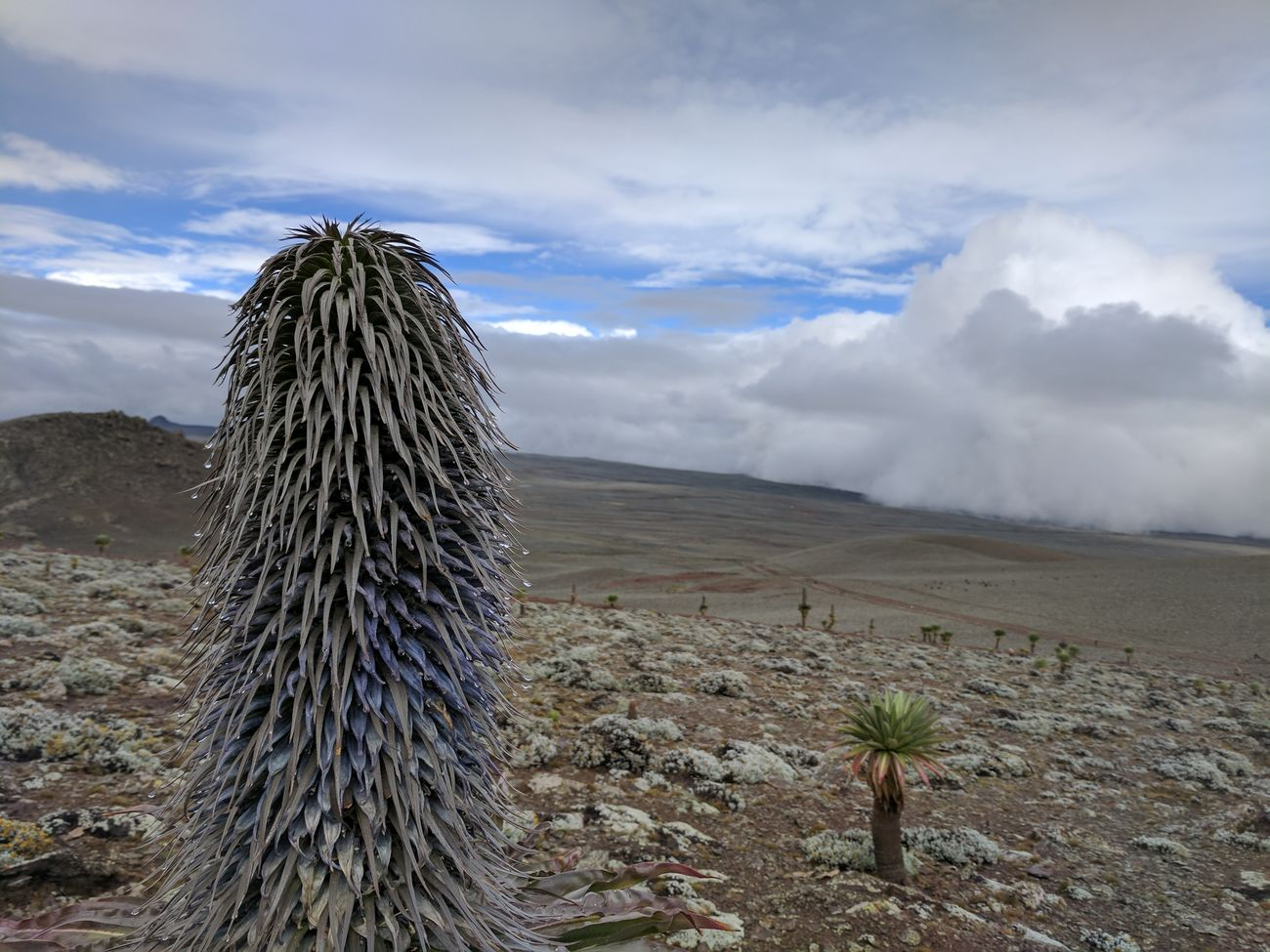 Travel Photography Hiking Adventures Balemountains Surreal Misty Goba Ethiopia Nature Outdoors Cloud - Sky Day No People Sky Desert Pixel