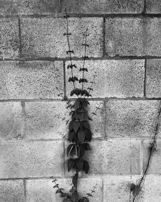 Sobreviver. Vscocam Vscocambr Photography Komfotografias Photo Fotografeumaideia Instagram Instagrambrasil Instagoodmyphoto Peoplescreatives Exploretocreat Blackandwhite Blackandwhiteseries Peb  Architecture