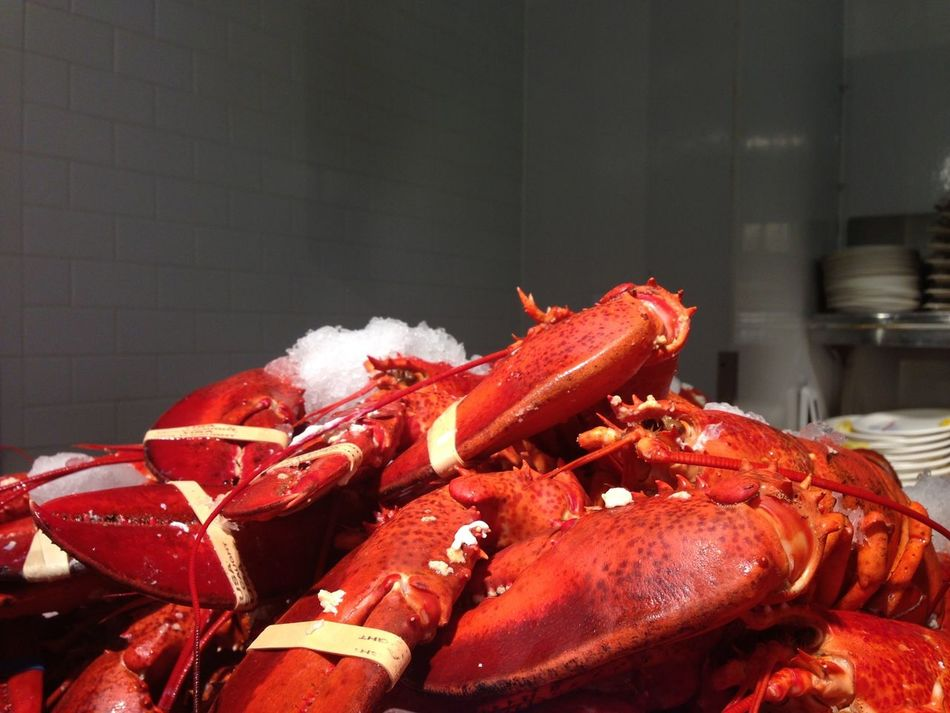 Beautiful stock photos of lobster, Animal Themes, Animals In The Wild, Close-Up, Dead Animal