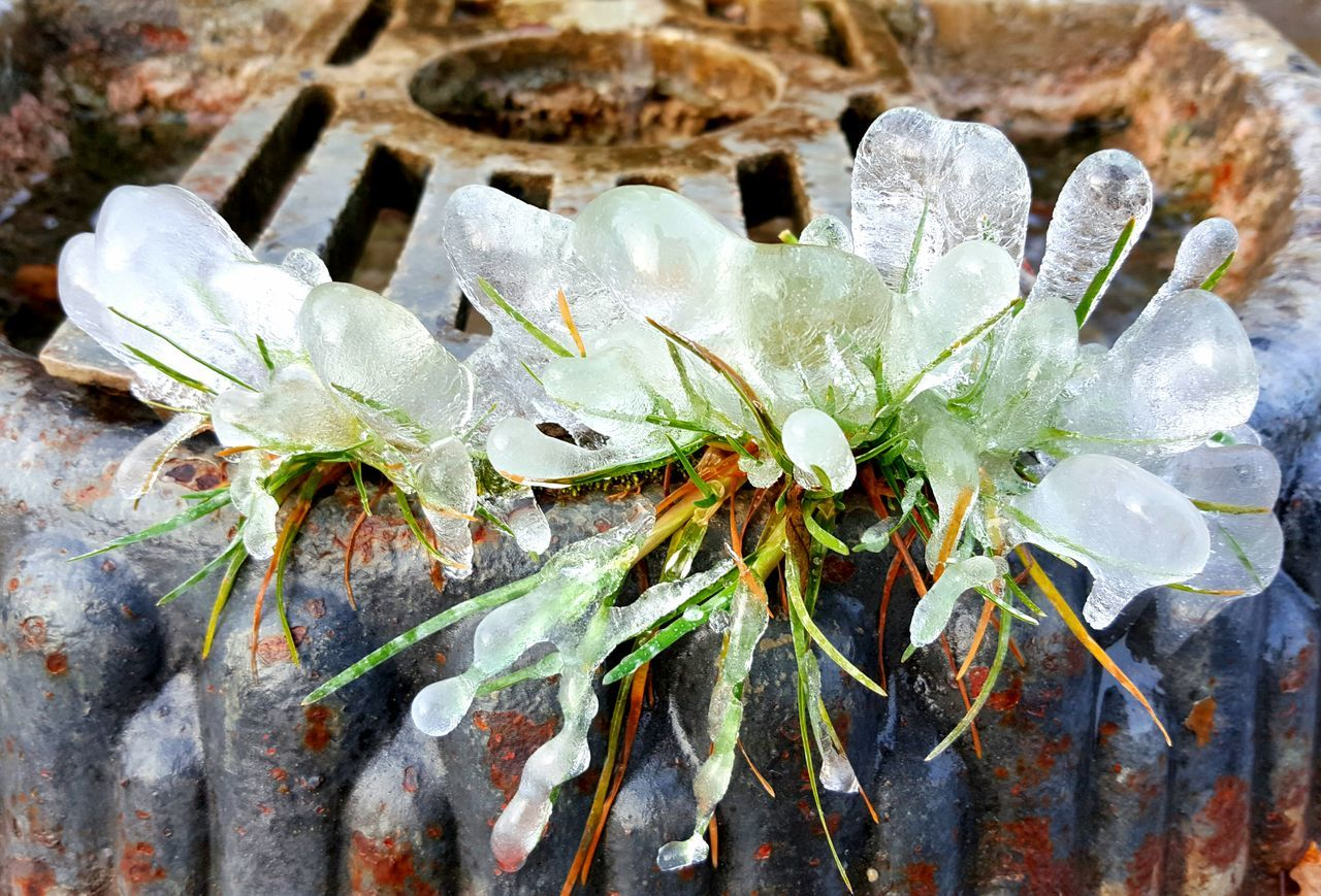 Nature Growth Outdoors Beauty In Nature Plant Natural Phenomenon Natura Natural Beauty Ice Ice Age Freddo Polare!😆 Freddo Ghiaccio Freddo Inverno Inverno❄❄❄ Water Fragility Beauty In Nature Plant Freshness Samsung Galaxy S7 Edge