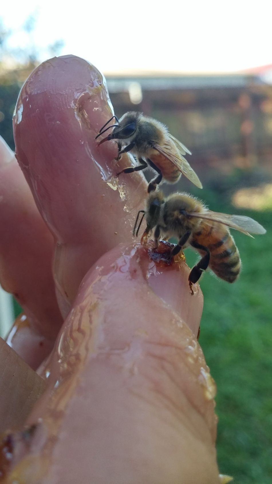 And i see you too Insect Close-up Day Nature Bee Outdoors Summer NZ Style I See You Women Who Inspire You Hanging Hallo Yves Bees🐝 Perching Food Feeding  Insect Theme Human Body Part Focus On Foreground