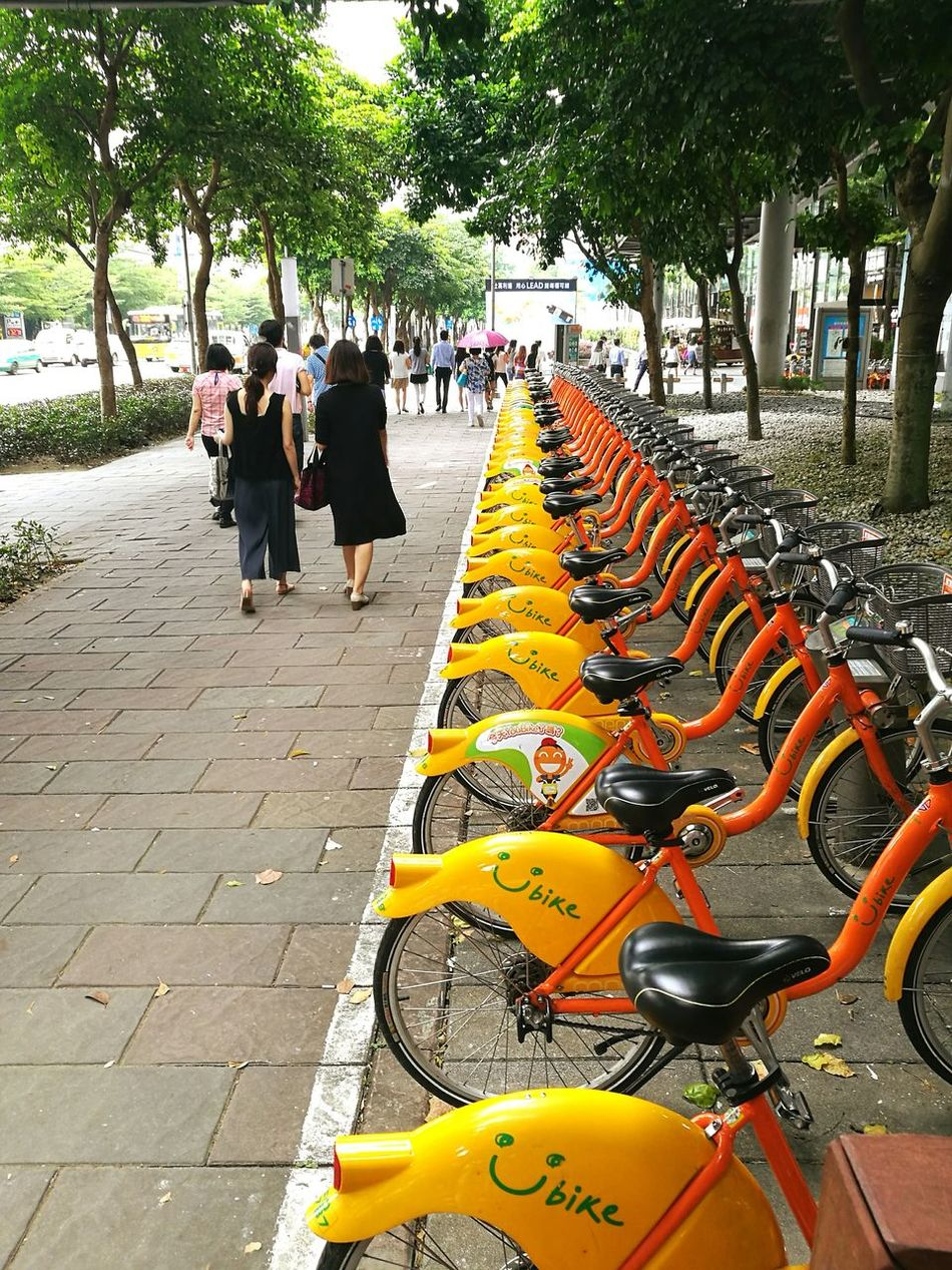 Ubike In A Row Yellow Orange Color Bright Footpath Outdoors Organized Neat Taipei City Street Art Lifestyle People Healthy Tree Greenery Day