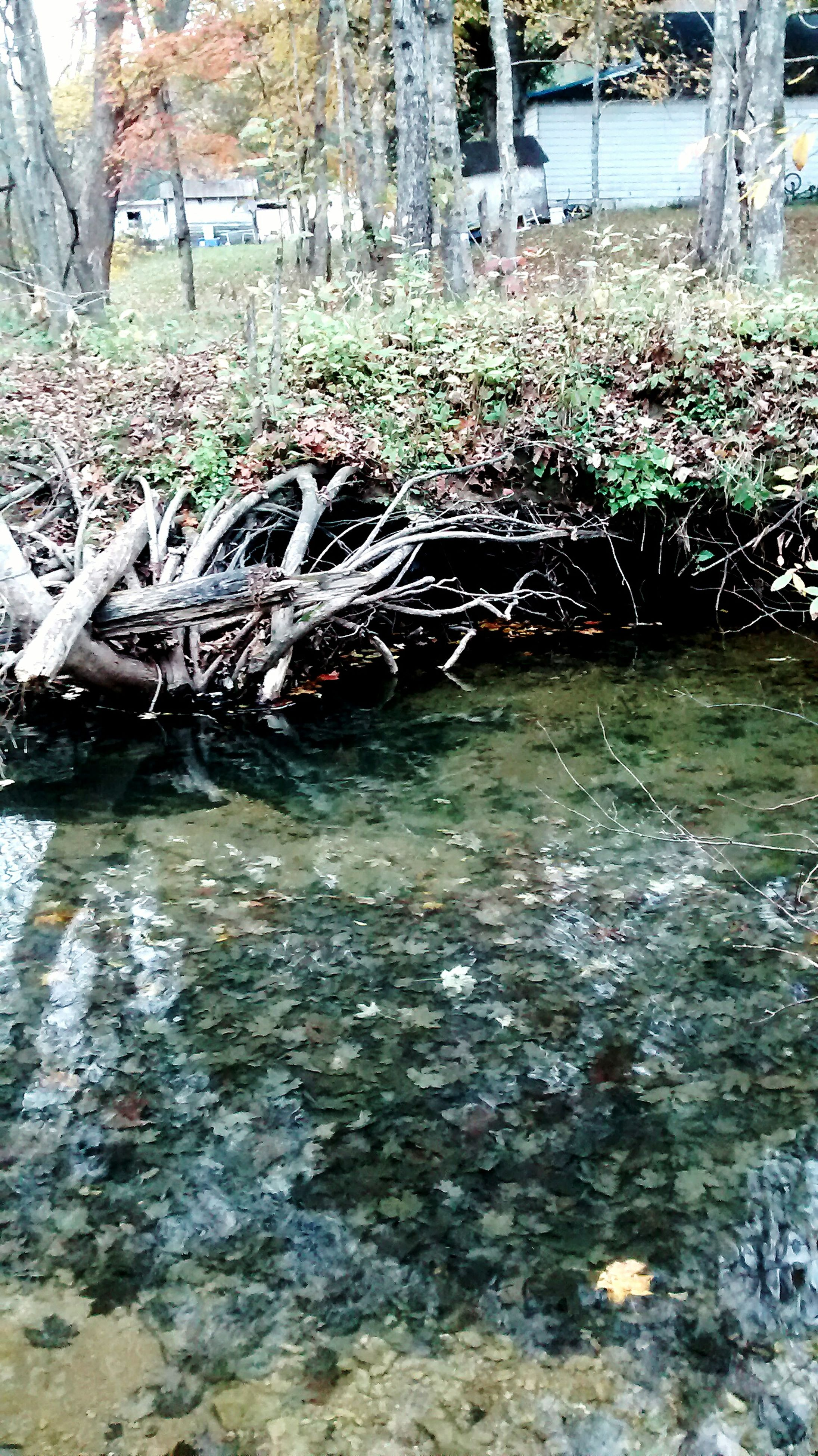 water, tree, mode of transport, transportation, nature, day, plant, outdoors, river, waterfront, no people, sunlight, tranquility, park - man made space, growth, bicycle, reflection, pond, lake, branch