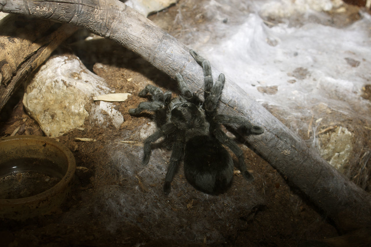 Beautiful stock photos of spider's, Animal Leg, Animal Themes, Close-Up, Day