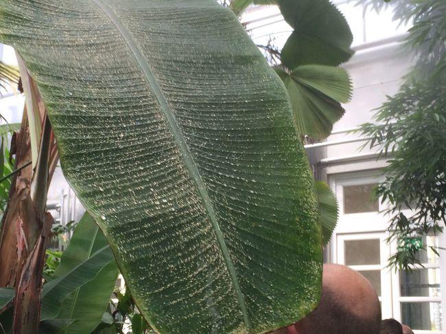 Tropical Djungle Lotus Water