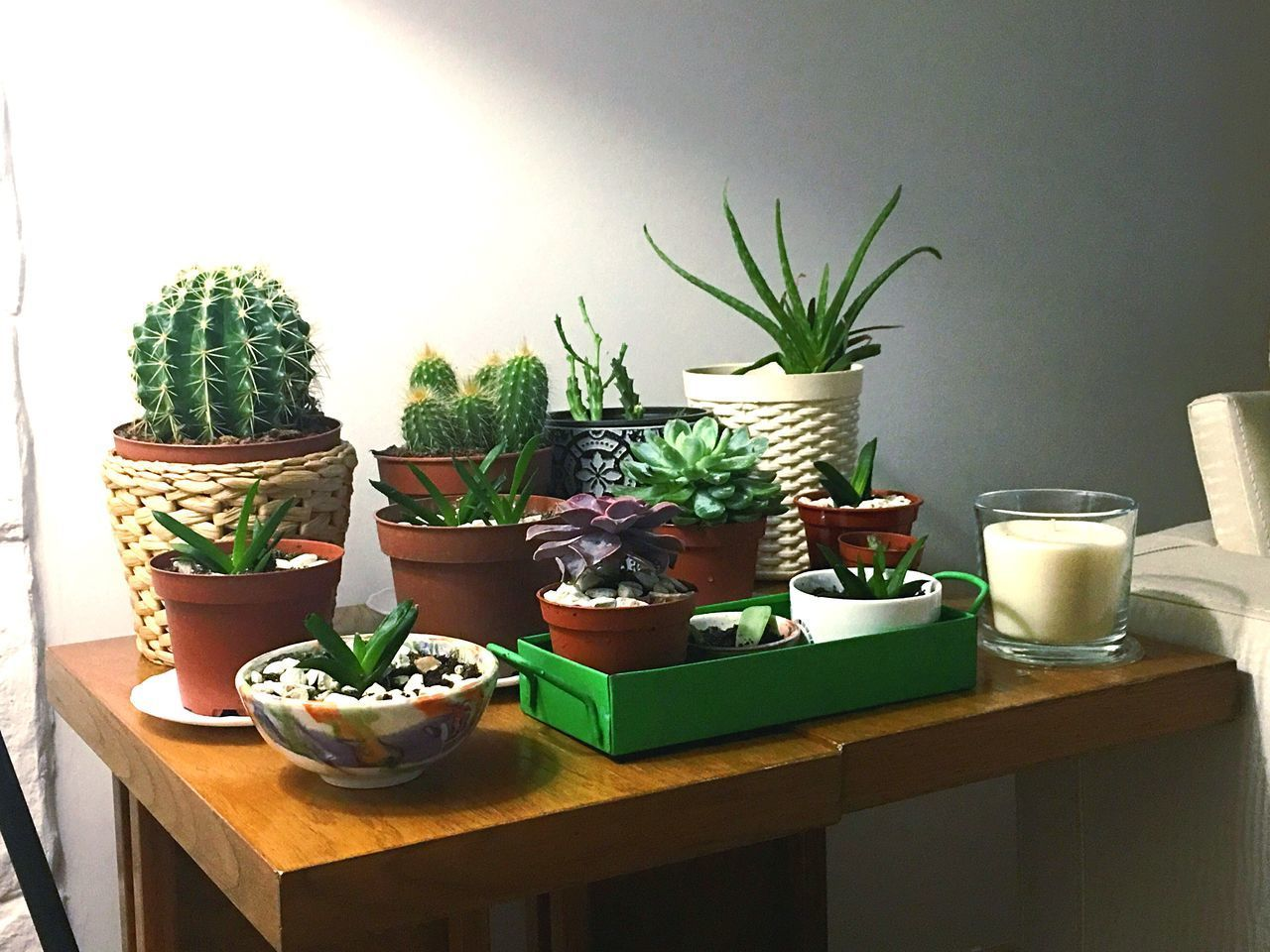potted plant, cactus, plant, growth, table, green color, no people, nature, indoors, day, beauty in nature