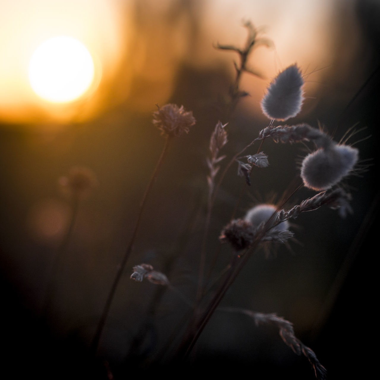 Close-up EyeEm Nature Lover Flower Freshness Growth Live For The Story Nature Nature Photography Nature_collection No People Plant Plant Spring Sunset Sunset Silhouettes Sunset_collection