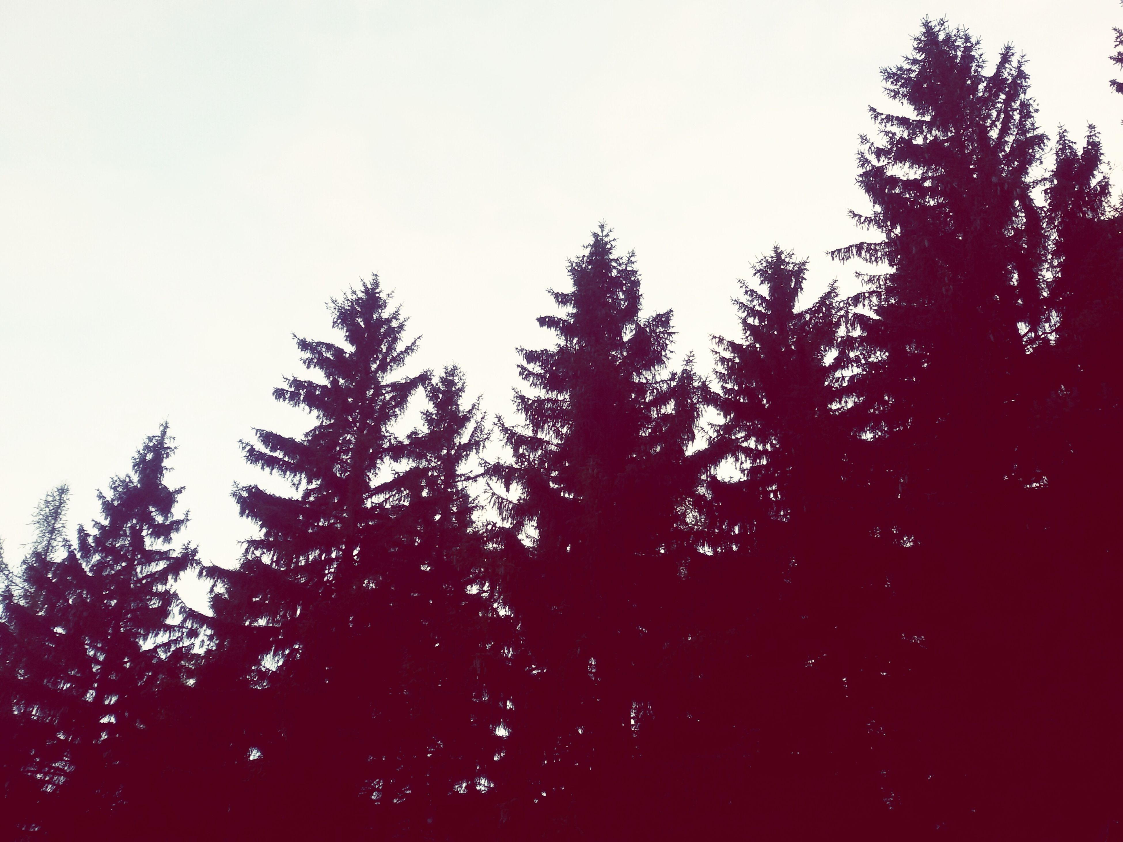 tree, silhouette, clear sky, low angle view, tranquility, growth, beauty in nature, nature, copy space, tranquil scene, sky, scenics, outdoors, dusk, no people, branch, idyllic, forest, day, high section