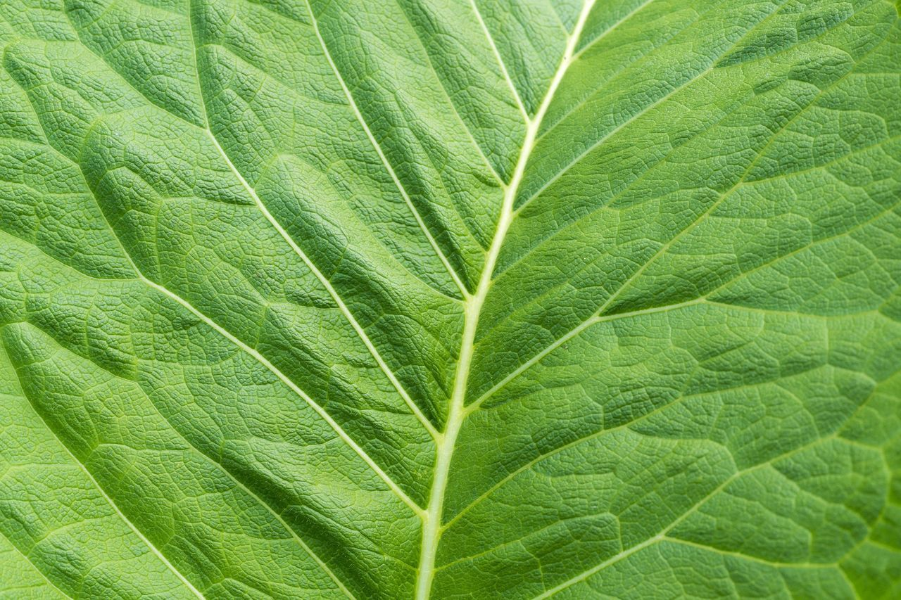 Structure of a green Leaf Green Leaves Leaf Color Nature Textured  Textures Natural Fresh Structure Surface Chlorophyll Beauty In Nature