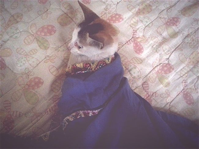 Kitty Cat Cat Kittenoftheday Wrap Clothes Skirt Blue Whitecat Yellowcat