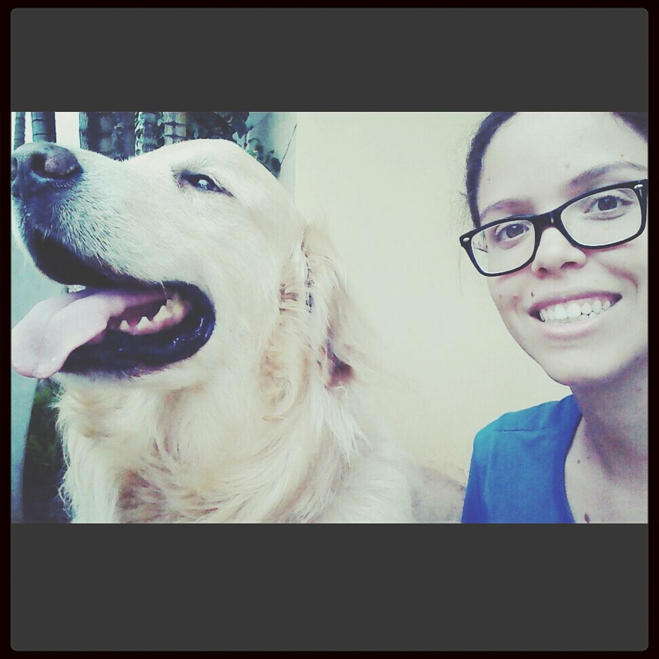 Playing With The Animals Lovedogs Ilovegoldenretrievers Selfie ✌