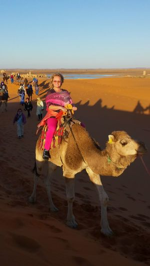 That is me enjoying very muchCamel Riding Camel Ride. The camel seems to smile nearly as much as i do, doesn't it? 😉😆 Deserts Around The World Desert Beauty Desert After Heavy Rains with Rain Puddles, huge like ponds. Tourist Attraction  Desert Landscape Landscapes Caravane  Happy Tourists Colourful Desert Sand Light And Shadow Blue Sky Colourful Nature Brown Gold Pink Blue Light Blue Sublime Living Holiday POV Enjoying Life Desert Safari Desert Camel Things I Like Just Before Sunset camels and peopleMirroring On Desert Sand Done That.