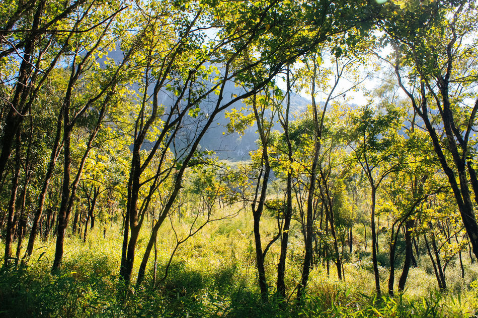 Chiang Mai | Thailand Doi Luang, Chiang Dao Field Forest Green Tree Trekking