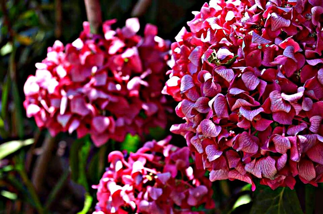Nature Novivinodolski Flowers