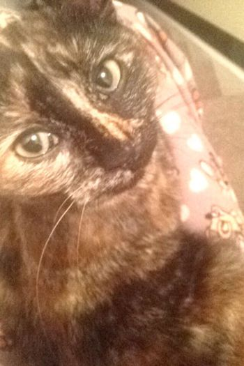 My princess Cat♡ Taking Photos Pretty♡ Kitten Gingey Cute Animals Pets Family