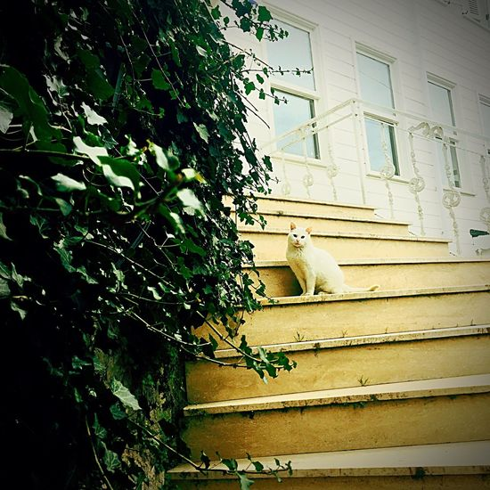 Home Cat Animals Catsofinstagram