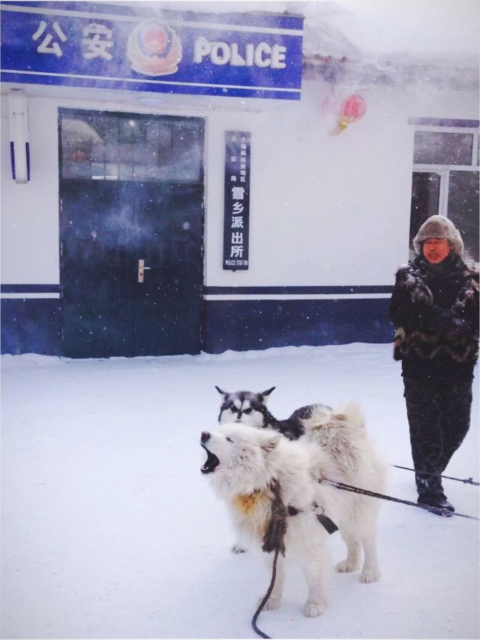 忙碌的日子,想念在路上的旧时光。 Dog Winter Mammal Real People One Person Snow Lifestyles Outdoors Warm Clothing Nature Vi