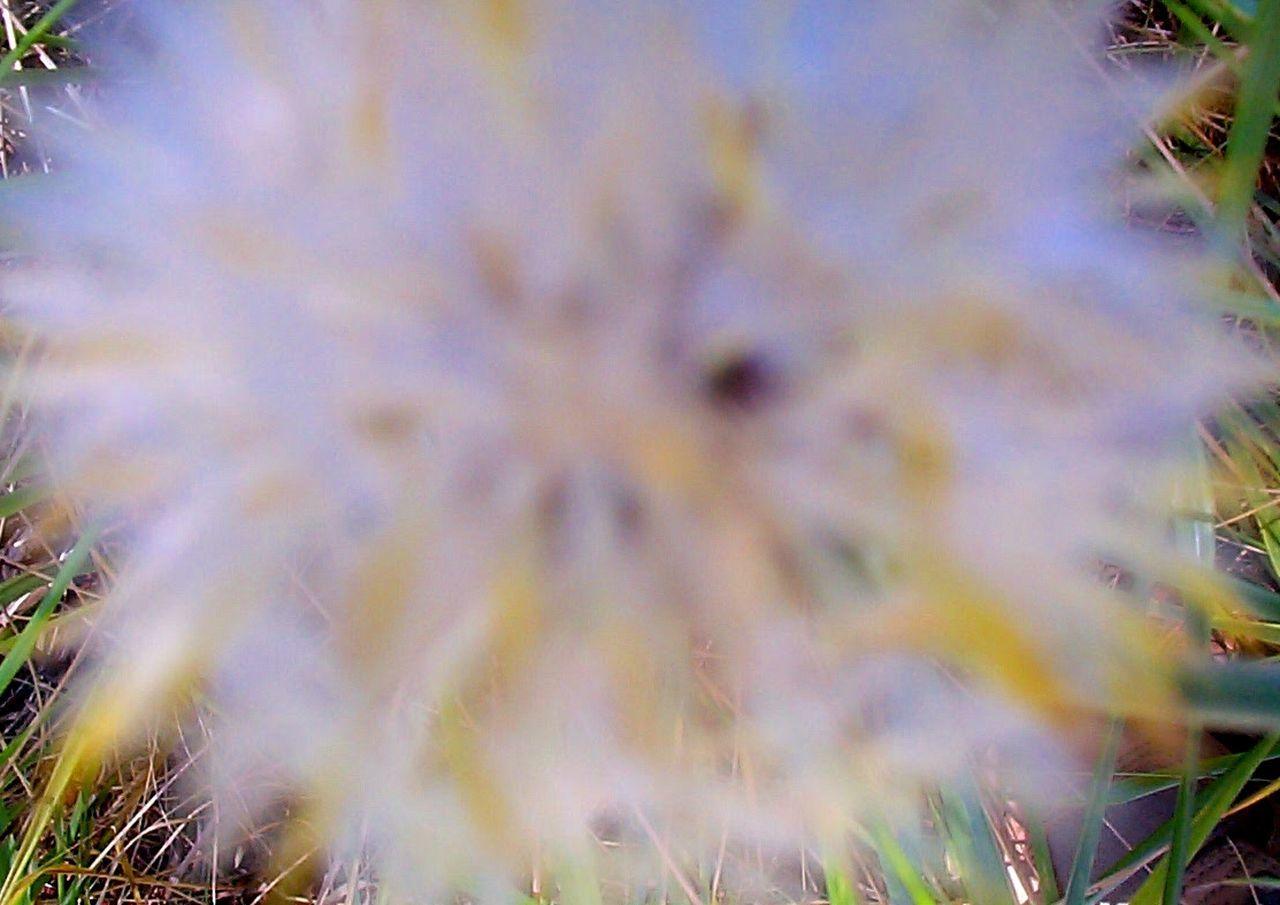 Detail Shot Of A Blurred Flower