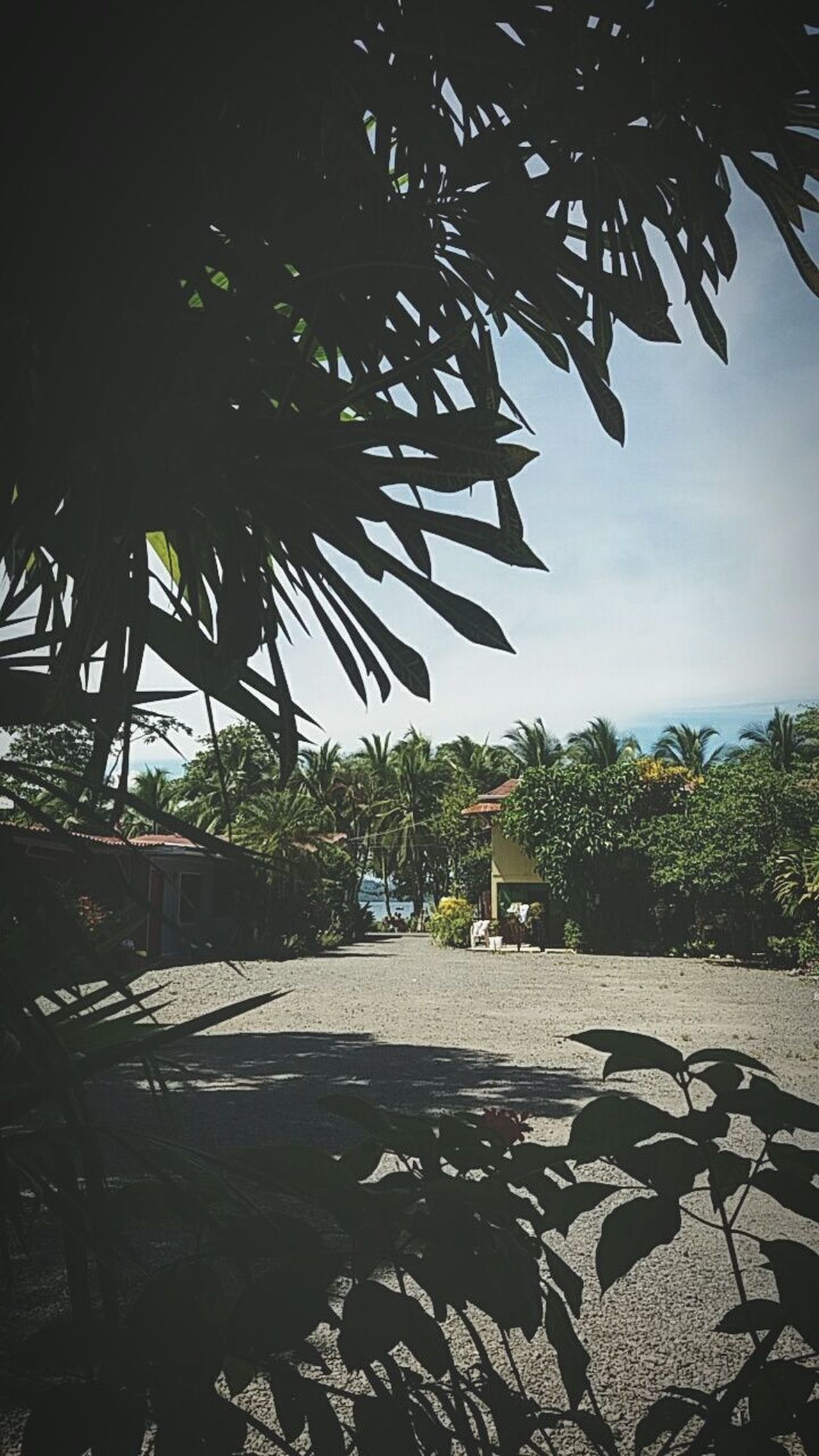 Pura Vida 🤘 🏖 No People Nature Outdoors Palm Tree Sky Water Day Costa Rica Pura Vida ✌ First Eyeem Photo