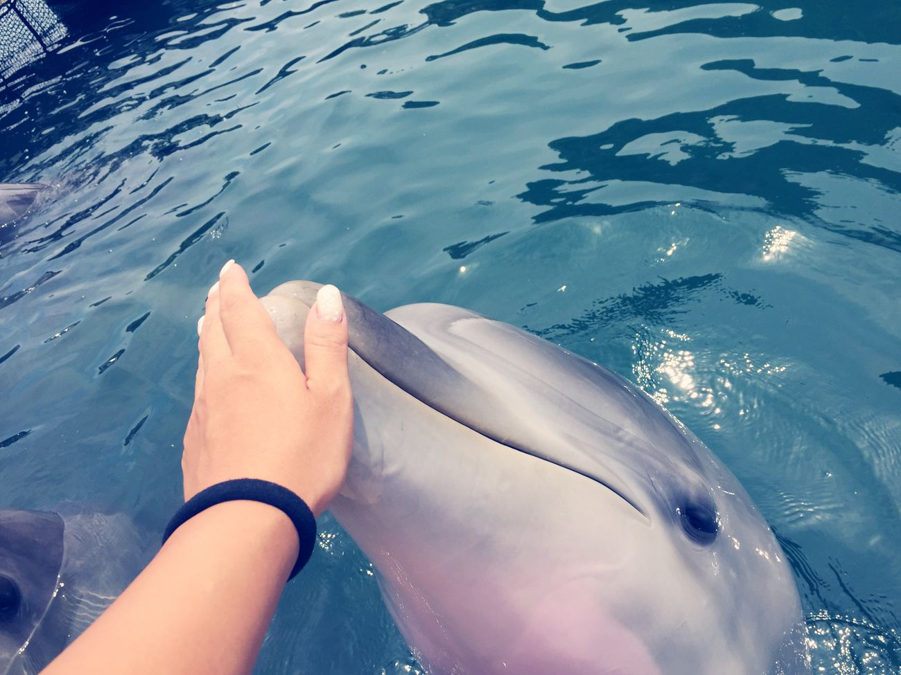 Dolphin Japan Nature See Summer