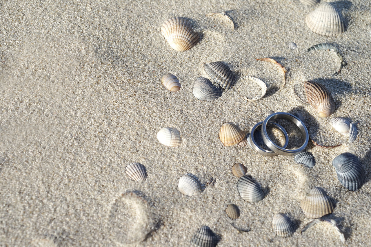 Wedding rings on seashells by the beach Beach Beach Wedding Close-up Copy Space Day Jewelry Nature No People Nobody Norderney Outdoors Sand Seashells Wedding Wedding Invitation Wedding Rings Wedding,rings,jewelry