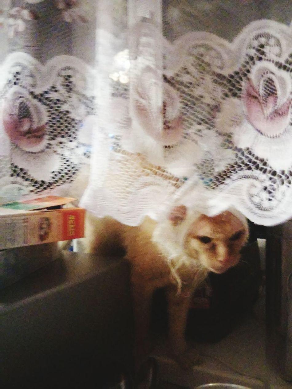 беспаливноть нувыпоняли кошкавшоке
