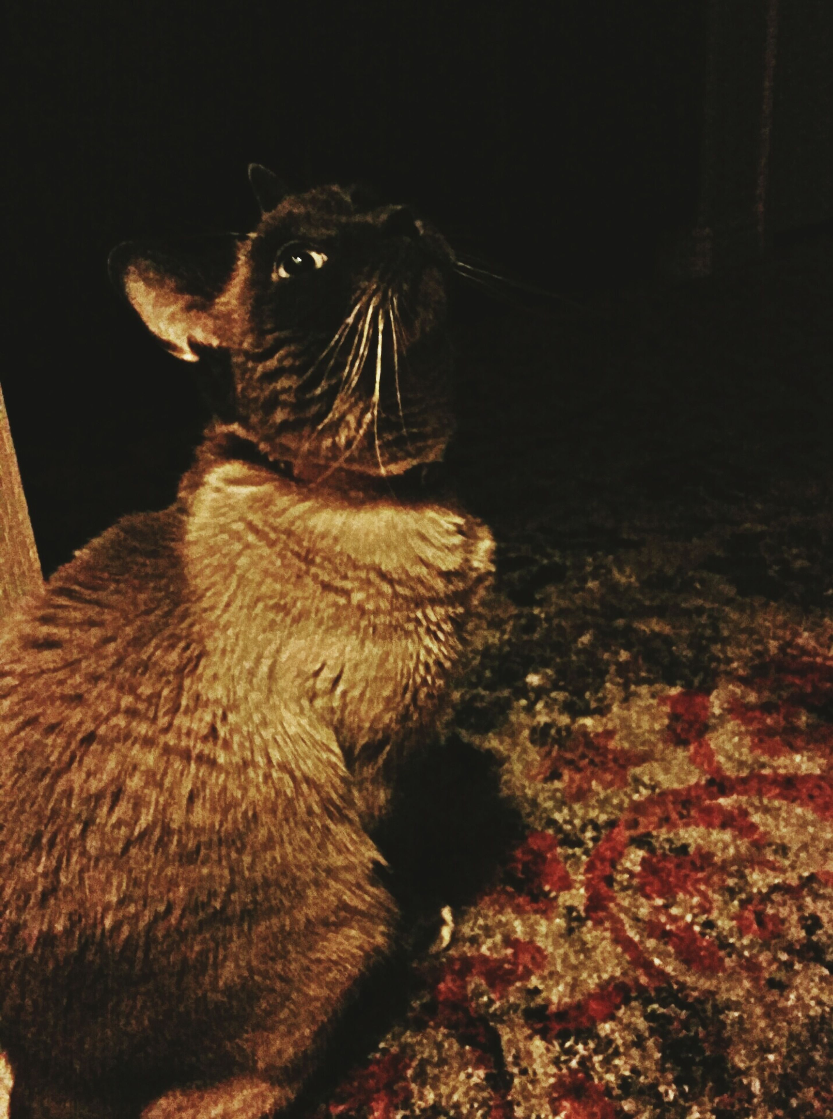 animal themes, one animal, mammal, domestic animals, pets, domestic cat, indoors, cat, feline, whisker, close-up, night, looking away, sitting, animal head, wildlife, relaxation, animals in the wild, no people, zoology