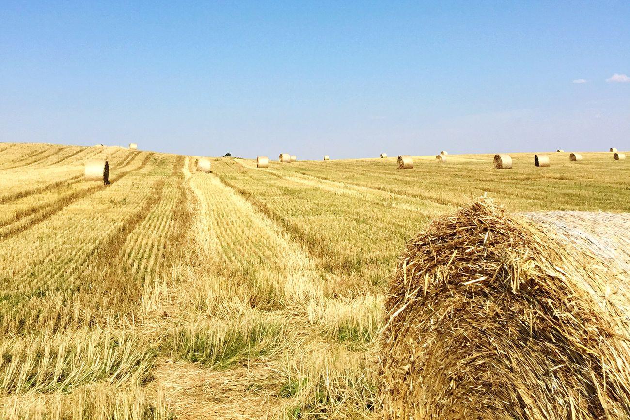 Round Hay Bales in the Cornfield Schorfheide Uckermark Brandenburg EyeEm Nature Lover Enjoying Life Relaxing Summer Heatwave