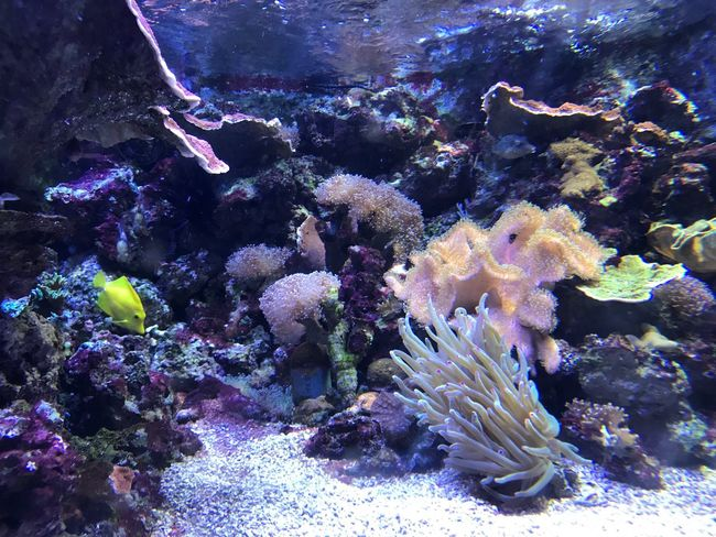 Underwater UnderSea Sea Life Coral Fish No People Water Nature Animal Themes Sea Animals In The Wild Beauty In Nature Swimming Clown Fish Day Outdoors Close-up