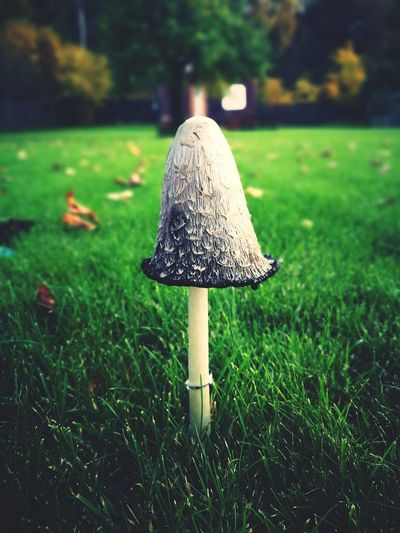 Autumn Grass Growth Mushroom Nature Green Color Outdoors Fungus Day Close-up No People Toadstool Beauty In Nature First Eyeem Photo