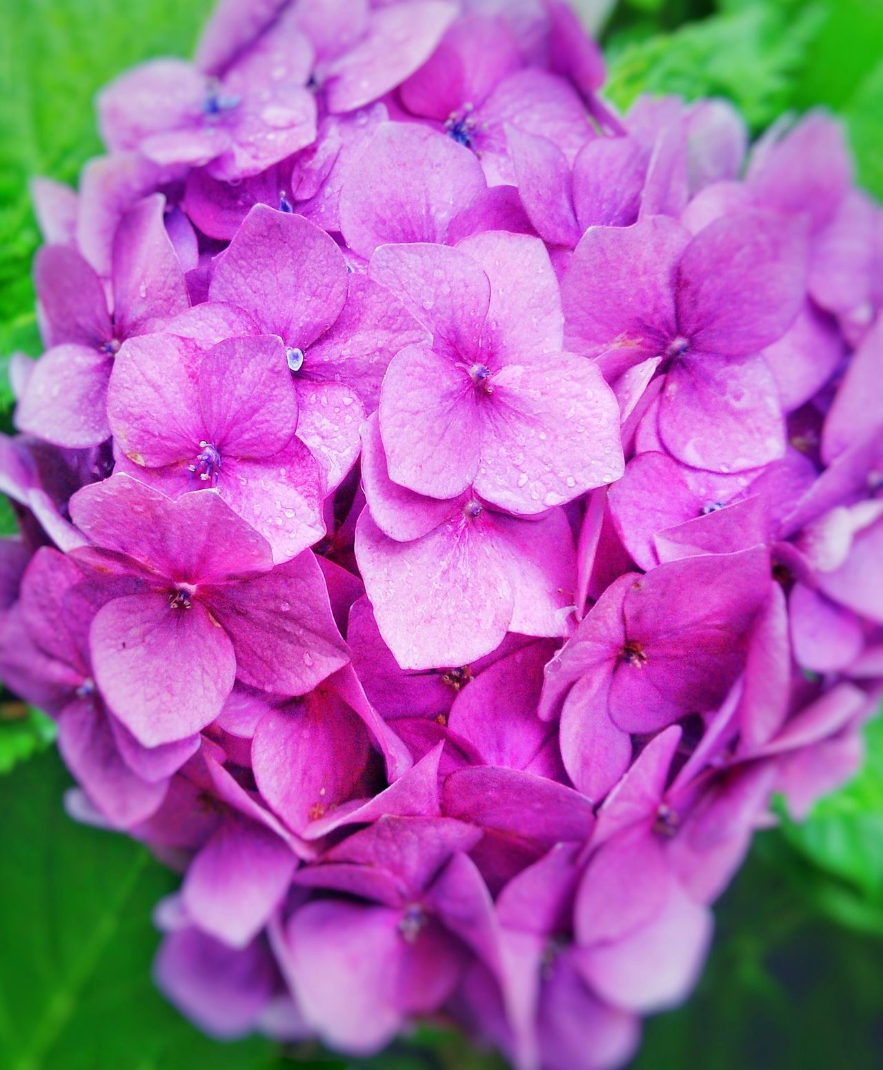 Flower Nature Plant Beauty In Nature No People Flower Head Purple Freshness Growth Pink Color Close-up Outdoors Day